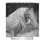 Nor Easter Shower Curtain