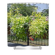 Norfolk Botanical Garden 8 Shower Curtain
