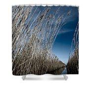 Norfolk Reeds Shower Curtain