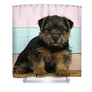 Norfolk Terrier Puppy Dog, Sitting Shower Curtain