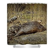 North American Beaver Shower Curtain