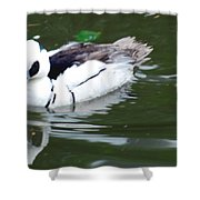 North American Male Smew Shower Curtain
