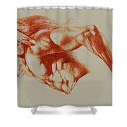 North American Minotaur Red Sketch Shower Curtain