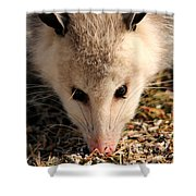 North American Opossum In Winter Shower Curtain