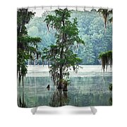 North Florida Cypress Swamp Shower Curtain