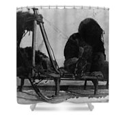 North Pole Sewing, C1909 Shower Curtain