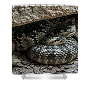 Northern Black-tailed Rattlesnake 2 Shower Curtain