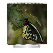 Northern Butterfly Shower Curtain