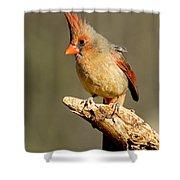 Northern Cardinal Cardinalis Cardinalis Shower Curtain