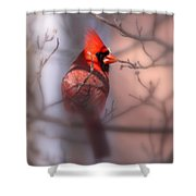 Northern Cardinal Dominent Male Shower Curtain