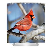 Northern Cardinal Scarlet Blaze Shower Curtain
