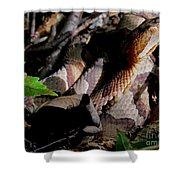 Northern Copperhead Shower Curtain