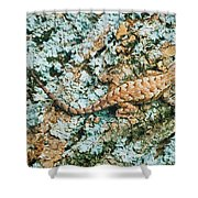 Northern Fence Lizard Shower Curtain
