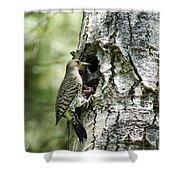 Northern Flicker Nest Shower Curtain