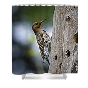 Northern Flicker Pictures 35 Shower Curtain