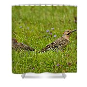 Northern Flicker Pictures 42 Shower Curtain