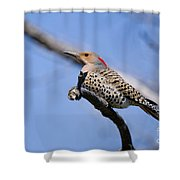 Northern Flicker Pictures 5 Shower Curtain