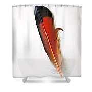 Northern Flicker Tail Feather Shower Curtain