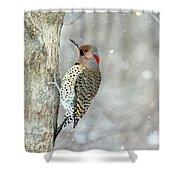Northern Flicker Woodpecker Shower Curtain