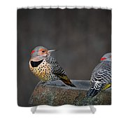 Northern Flickers Shower Curtain