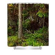 Northern Forest 1 Shower Curtain