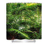 Northern Forest 3 Shower Curtain