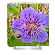 Northern Geranium By Transfiguration Of Our Lord Russian Orthodox Church In Ninilchik-ak Shower Curtain