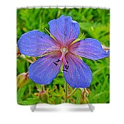 Northern Geranium In Jasper National Park-alberta  Shower Curtain