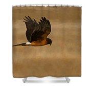 Northern Harrier Painterly Shower Curtain