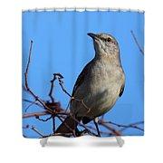 Northern Mockingbird IIi Shower Curtain