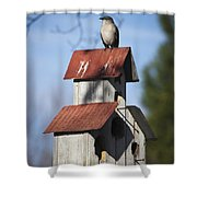 Northern Mockingbird Shower Curtain