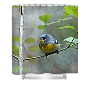 Northern Parula On Branch Shower Curtain