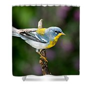 Northern Parula Warbler Shower Curtain