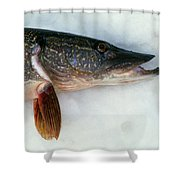 Northern Pike Fish On Snow, Close Shower Curtain