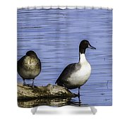 Northern Pintail Shower Curtain
