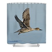 Northern Pintail Hen Shower Curtain