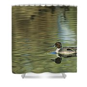 Northern Pintail In A Quiet Pond California Wildlife Shower Curtain