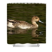 Northern Pintail Molting Shower Curtain