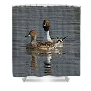 Northern Pintail Pair  Shower Curtain