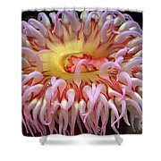 Northern Red Anemone Shower Curtain