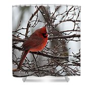 Northern Red Cardinal In Winter Shower Curtain