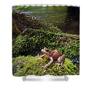 Northern Red-legged Frog Shower Curtain