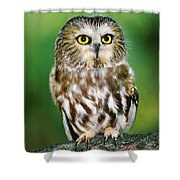 Northern Saw-whet Owl Aegolius Acadicus Wildlife Rescue Shower Curtain