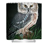 Northern Saw-whet Owl Shower Curtain by Sharon Duguay
