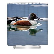 Northern Shoveler Shower Curtain