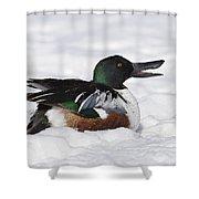 Northern Shoveler Shower Curtain