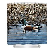 Northern Shoveler Swim Shower Curtain