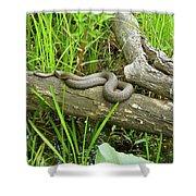 Northern Water Snake - Nerodia Sipedon Shower Curtain