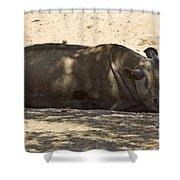 Northern White Rhinoceros - Ceratotherium Simum Cottoni Shower Curtain