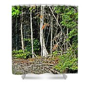 Northern Woods Shower Curtain